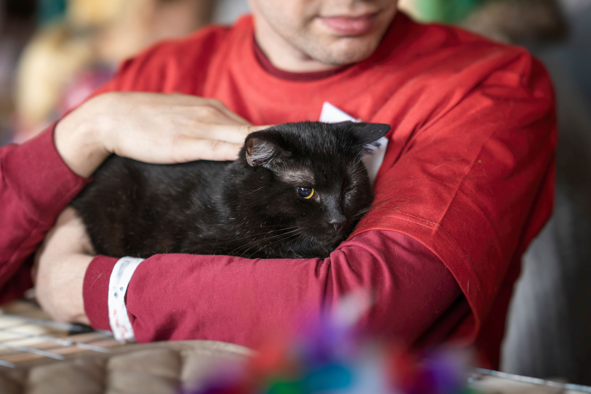 cute-black-cat-in-kind-hands-of-volunteer